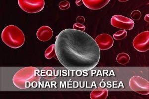 requisitos para donar médula ósea