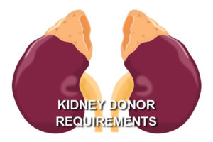 kidney donor requirements