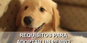 requisitos para adoptar perro