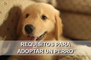 Requisitos para adoptar un perro